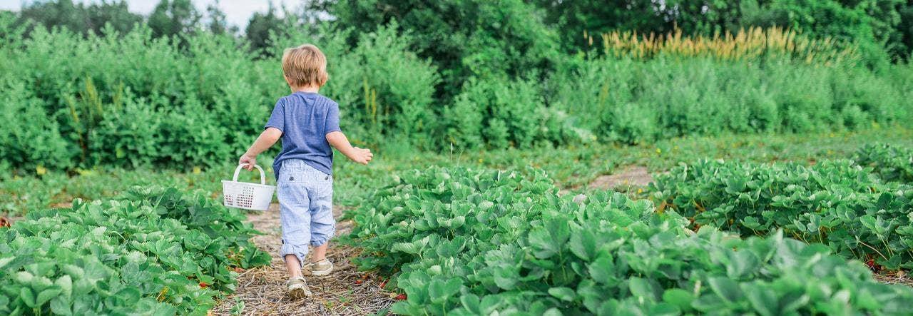 Kid picking berries in a field