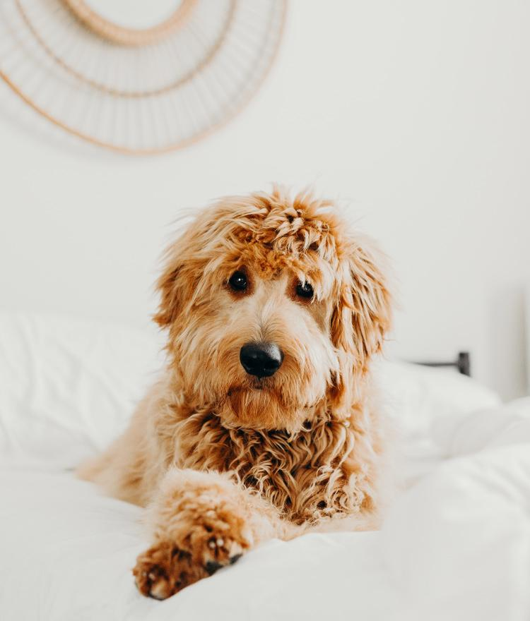 Here's Why Sleeping With Your Dog is Good for You