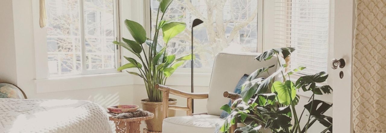 home houseplants