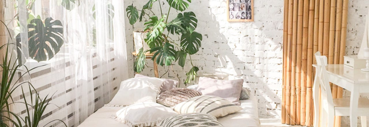 Seeding Plants For Your Bedroom