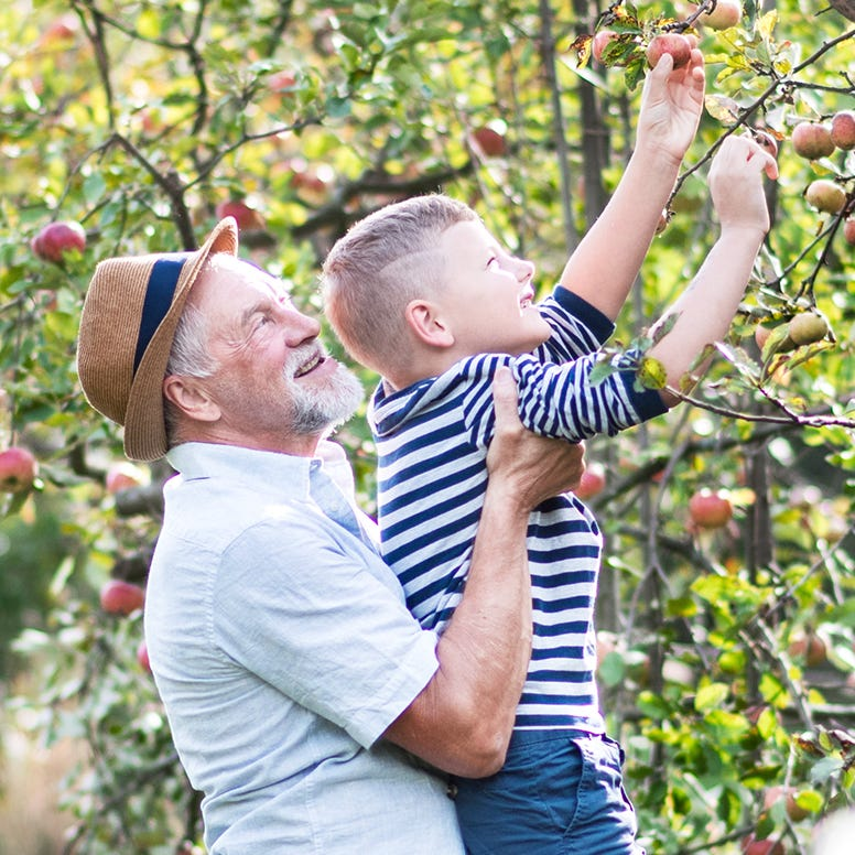 Grandfather holding up grandson picking an organic apple