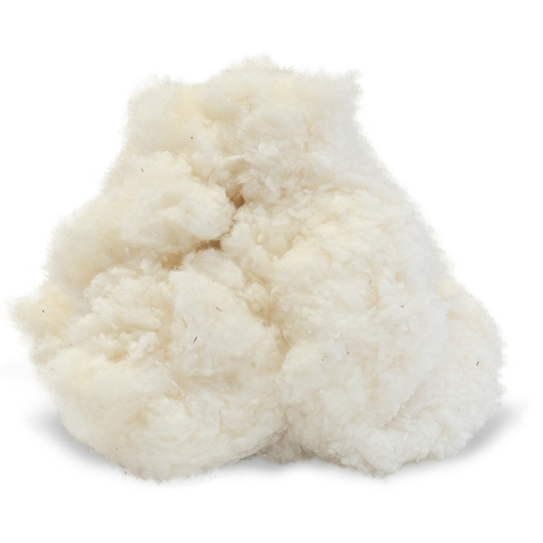 Fluffy chunk of organic cotton on white background