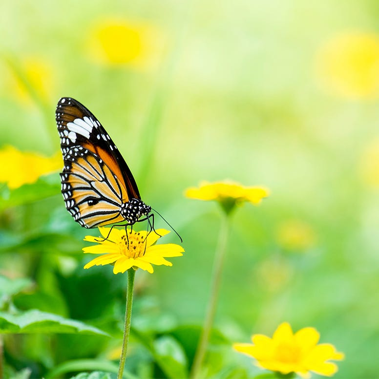 Close-up of beautiful butterfly on yellow flower